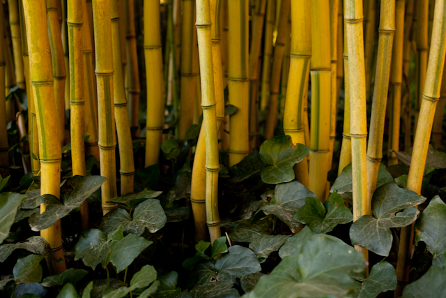 Bamboo is not a Tree: Meeting with the National Bamboo Mission